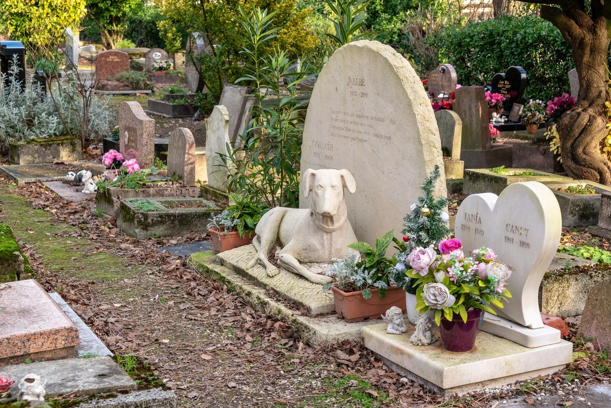 Cimetières animaliers paris statue chien