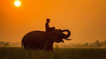 éléphant enfant soleil
