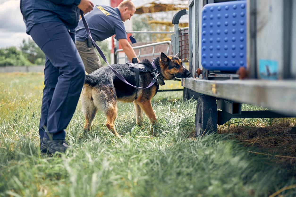 chien police