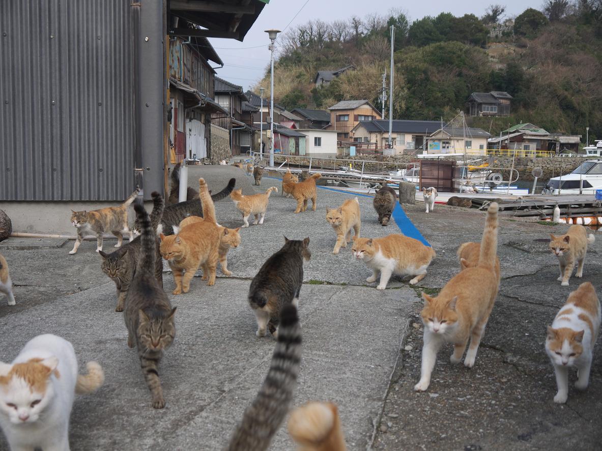 chat japon