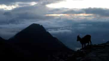 légende dahu ombre Alpes