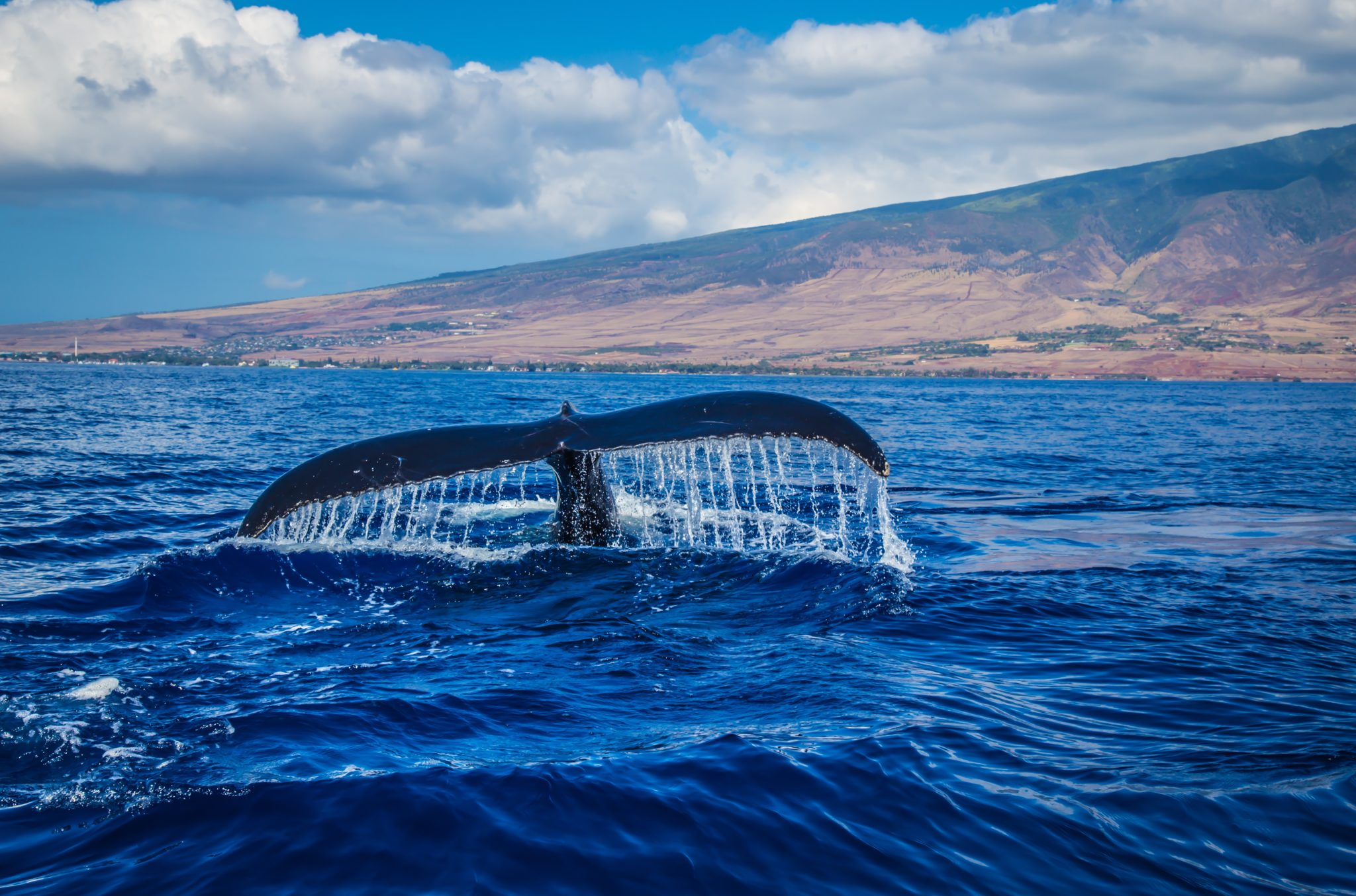 queue de baleine côte