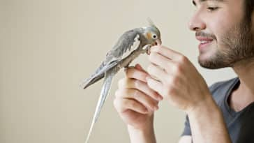 homme caresse un oiseau