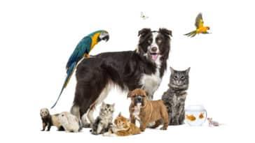 animal compagnie chien chat oiseau