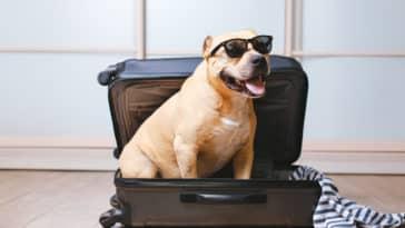 chien voyage