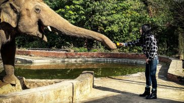 Kaavan éléphant Cher
