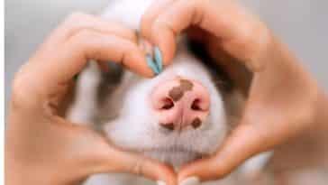 museau d'un chien entouré d'un coeur avec des mains