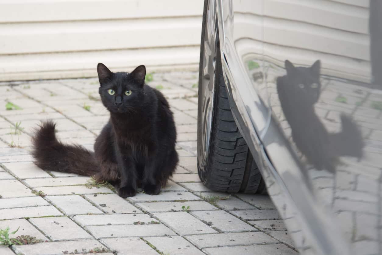 chat noir voiture voyage