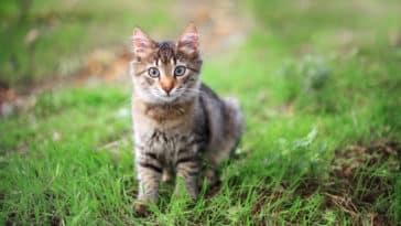chaton seul parc jardin