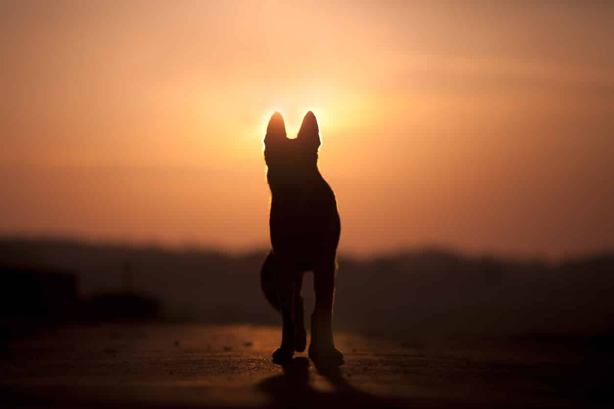 chien silhouette soleil
