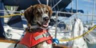 chien bateau gilet sauvetage