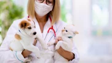 vétérinaire chien chat